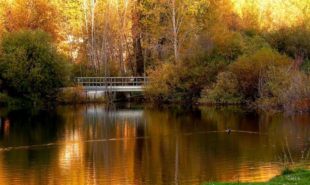 IMG_5749 idlewild bridge oct ch