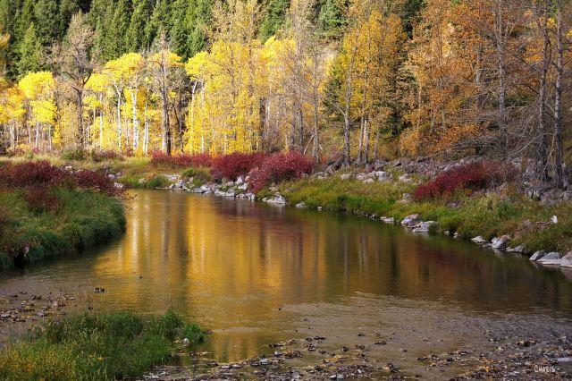 IMG_7173 coleman creek ch