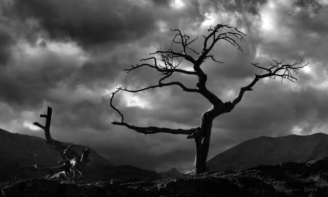 IMG_7388 burmis tree colour dark clouds bw