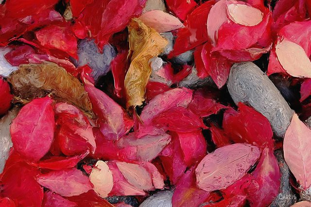 burning bush leaves crop