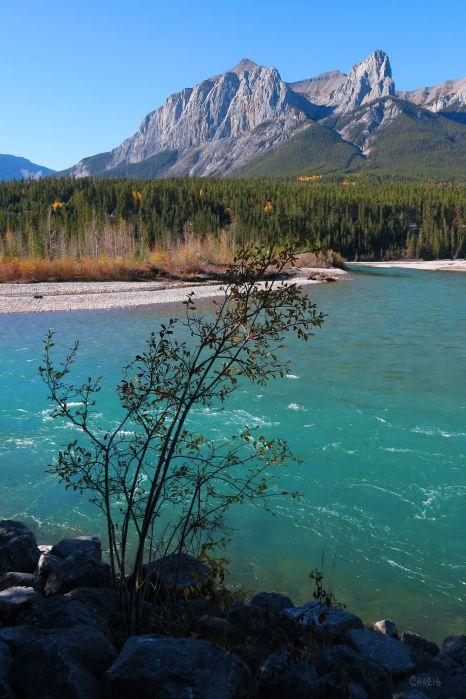 IMG_6622 canmore bow river ch
