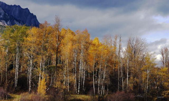 IMG_7221 Hosmer autumn