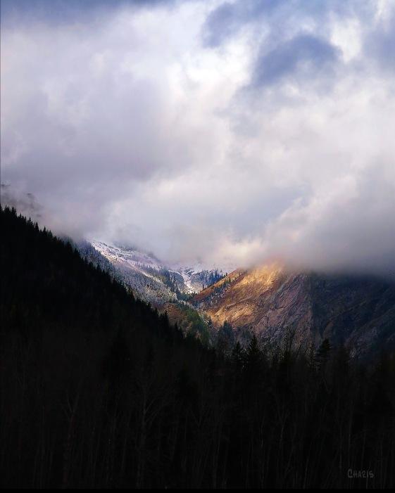 IMG_8597 ferni mountain fog colour ch crop