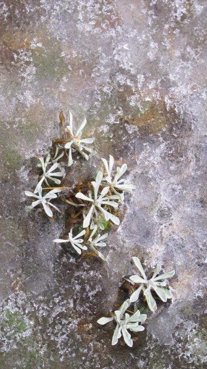 plants ice 046