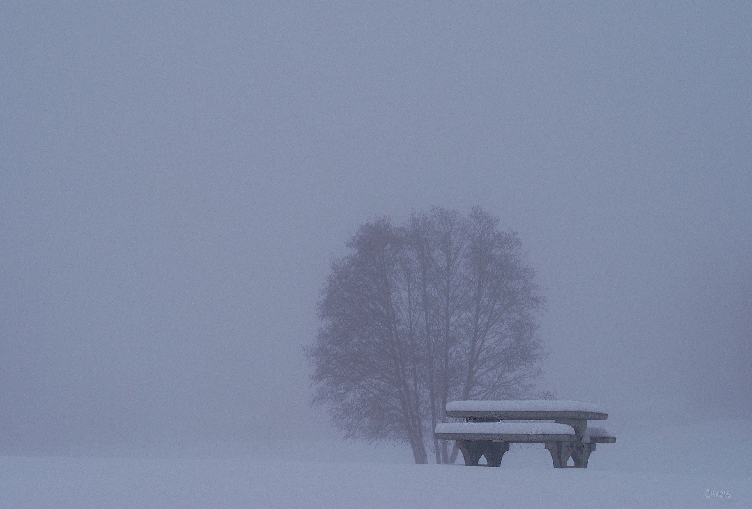 snow table tree kin park winter