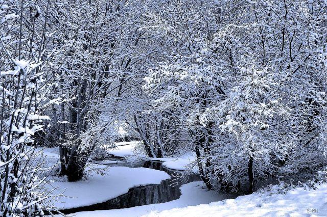 joseph creek wonter snow trees blue ch IMG_9148