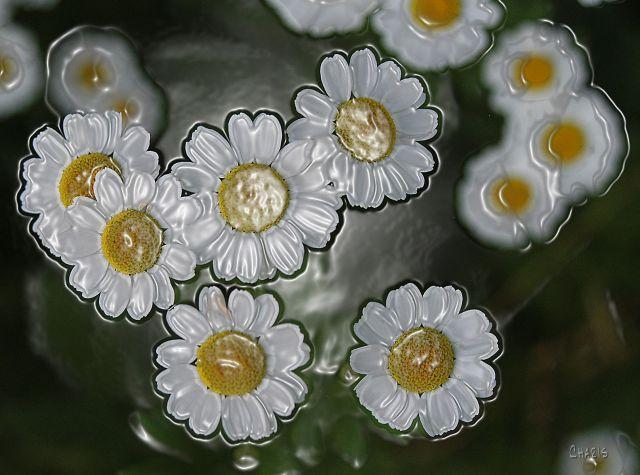 flowers plastic ch