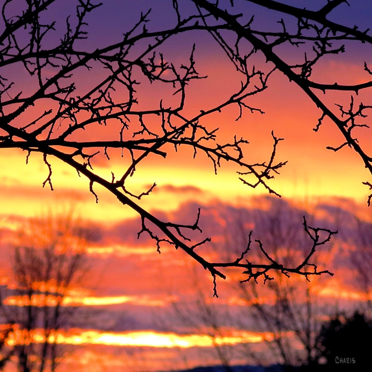sunset branches IMG_0313_edited-1