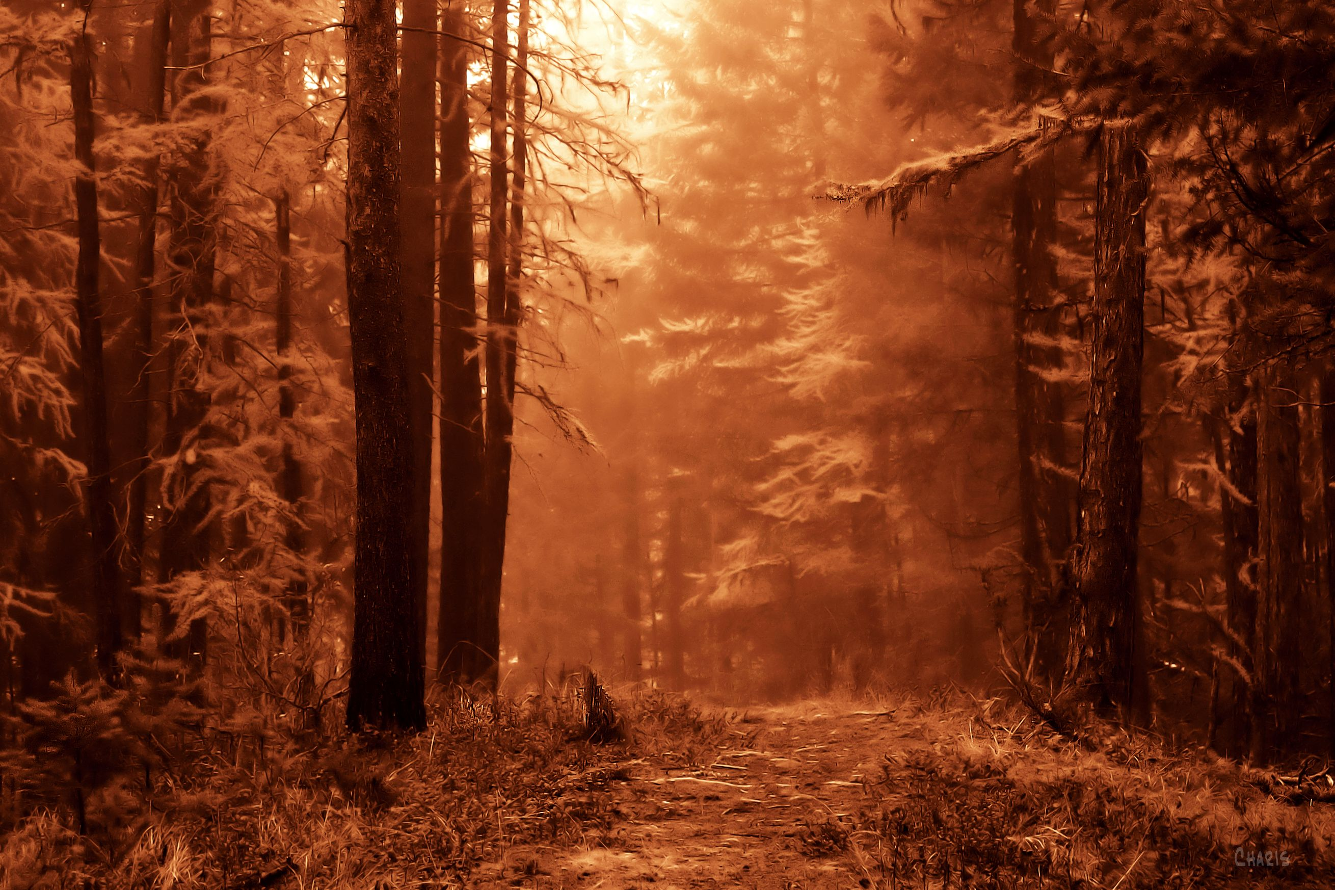 IMG_5347 sepia forest