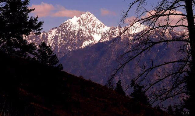 IMG_2437 mountain fisher dark trees ch crop