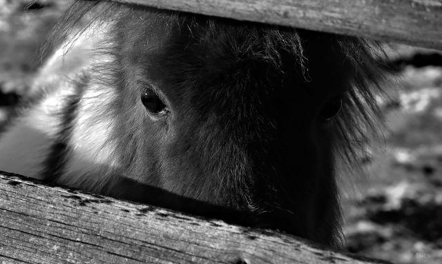 pony bw IMG_0576