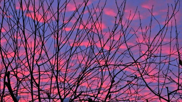 sunset sky pink branches ch IMG_0181
