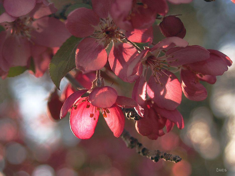DSC_0011 plum blossom bokeh
