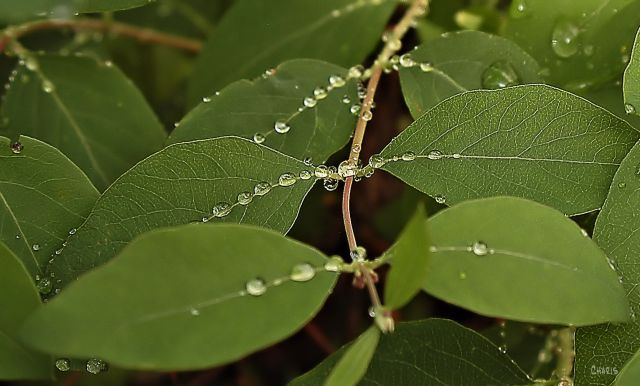 DSC_0009 leaves string rain drops ch
