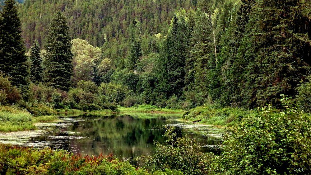 Yahk valley green ch IMG_4504