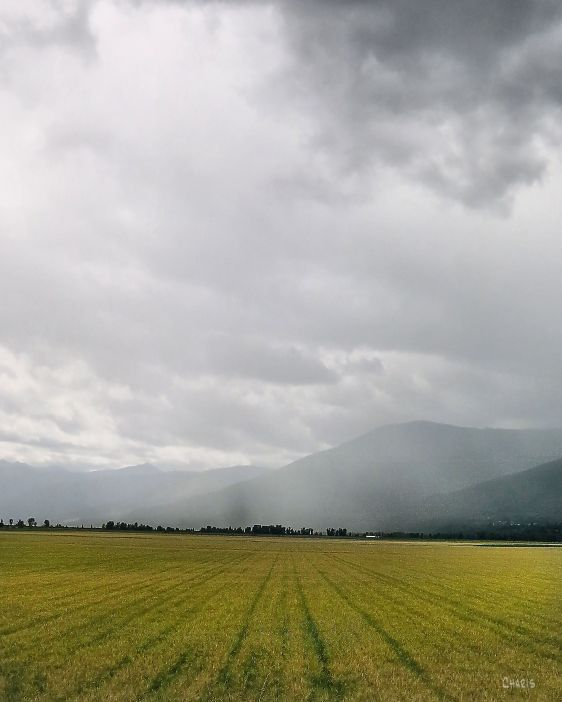 Creston gold field rain IMG_4469