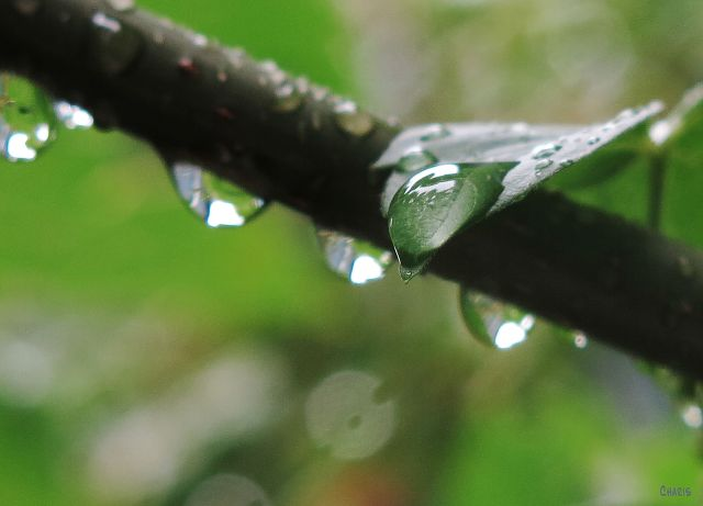 IMG_1867 raindrop 2 ch