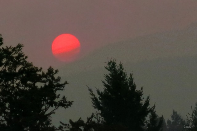 red sun ch aug 26 2 IMG_5157
