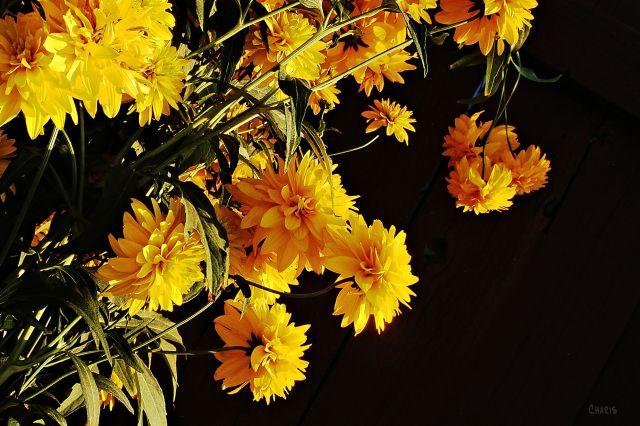 alley flowers ch DSC_0038