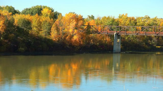 edmonton autumn bridge river 2 IMG_6159