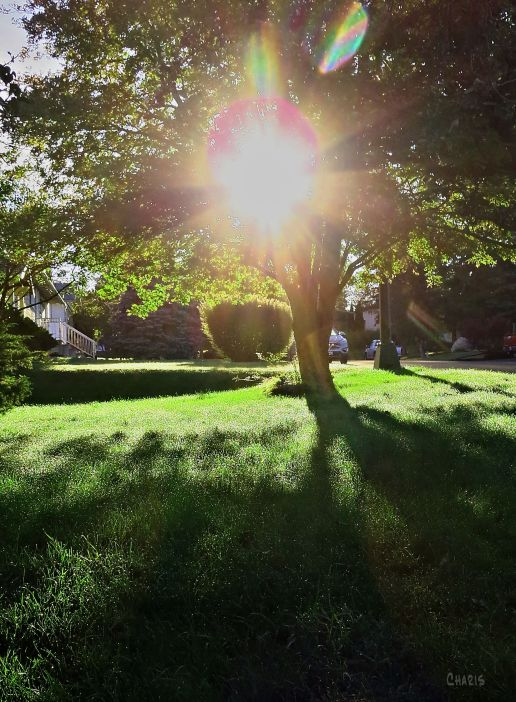 lawn light IMG_5520