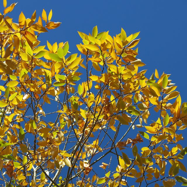 autumn leaves sky IMG_8156