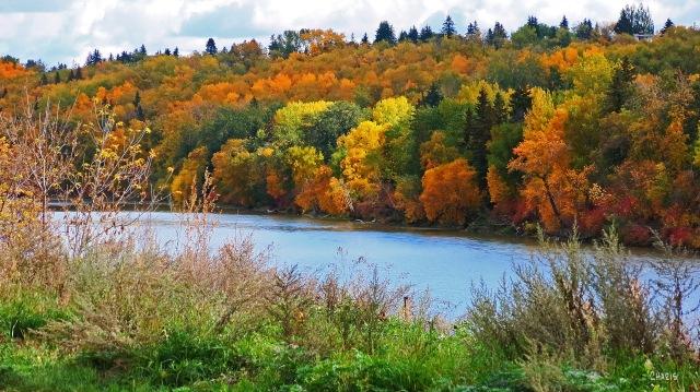 autumn N Sask river ch IMG_6086