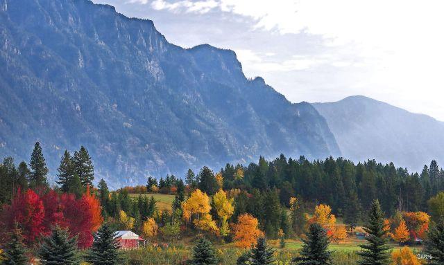Canyon autumn  ch mist IMG_7182