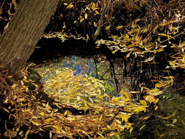 creek leaves autumn ch 2