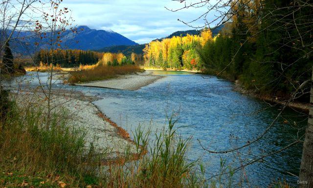 Elk river autumn Fernie ch IMG_6680