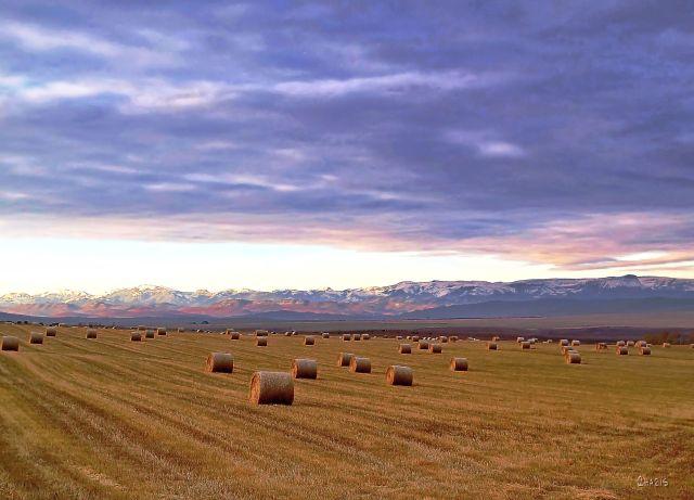 hayfield near bar u ranch ch