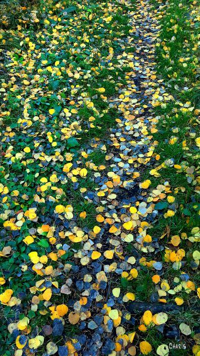 leaf path IMG_7530