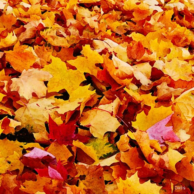 leaves maple sq ch