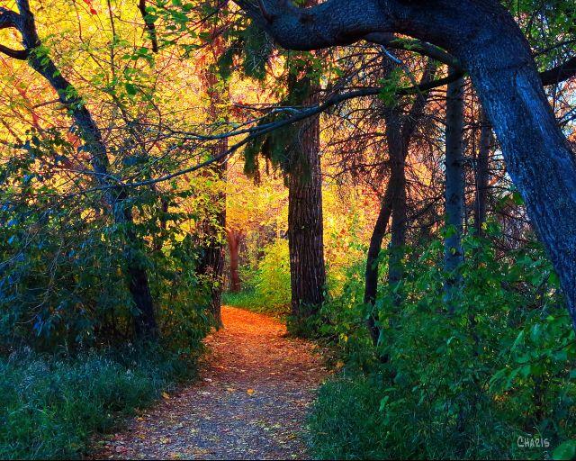 Riverdale path autumn ch IMG_6144