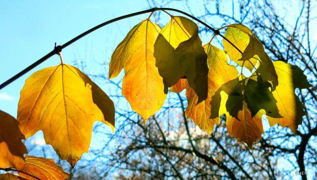 last branch autumn ch IMG_8642