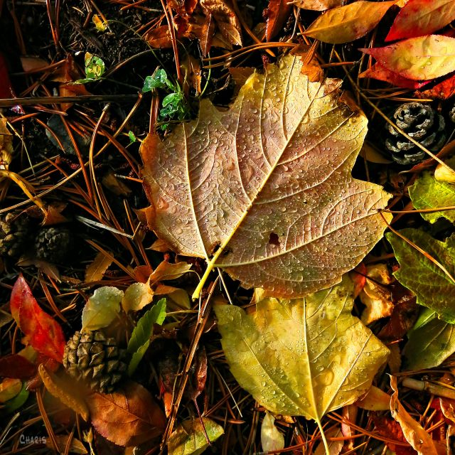 leaves ground IMG_8545
