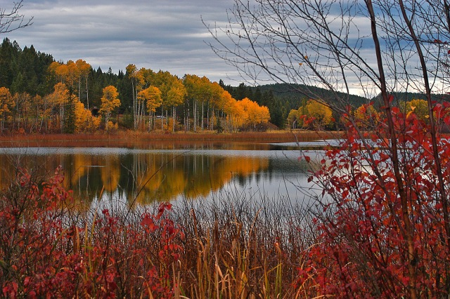 Mayook pond autumn DSC_0040_edited-1