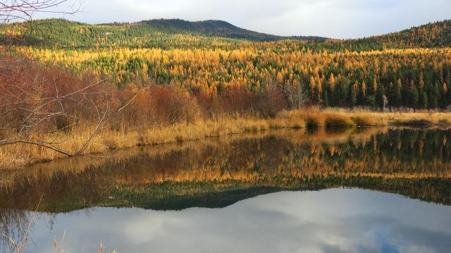 Peavine pond autumn IMG_8435