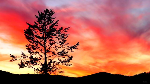 IMG_5073 sunset tree ch