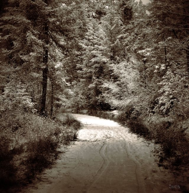 sepian forest snow trail; turn left ch bwIMG_9187