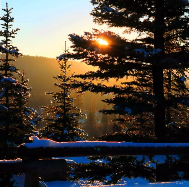 sunset trees snow icicles IMG_9379 ch