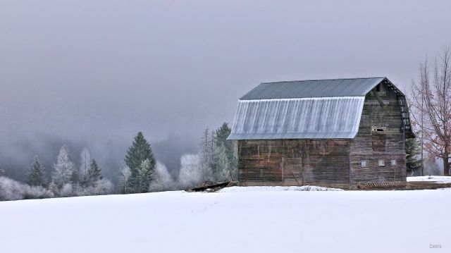 barn silver roof fog Creston ch IMG_0449