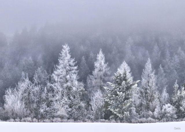 frosty forest creston ch 5x7 IMG_0446