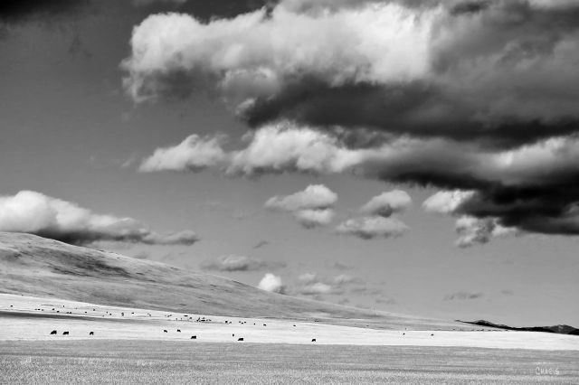 cowboy trail field 22x ch bw clouds IMG_8733
