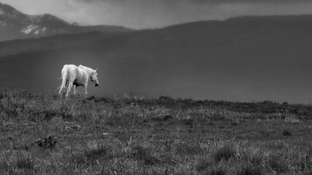 white horse ch bw IMG_1554