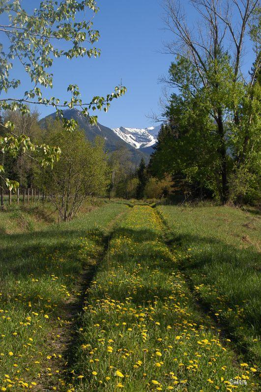 dandelion tracks trail mtn morrisey DSC_0077