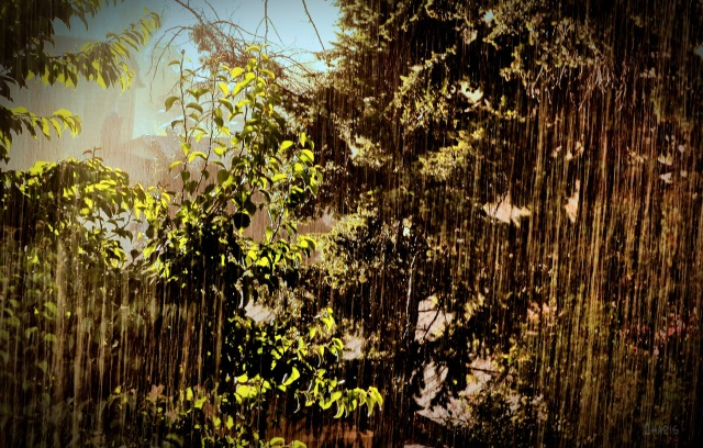 rain IMG_2674