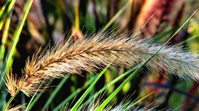 img_2425-grass-colour