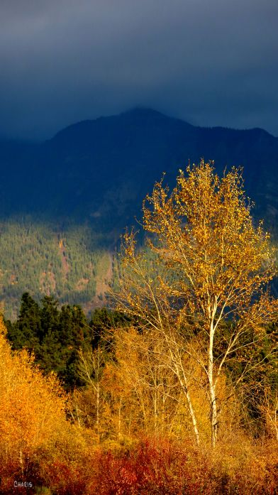 autumn-contrast-tree-mountain-rs-ch-img_4650