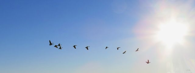 img_5679-flying-geese-sun-ch